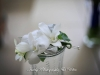 White dendrobium small pin