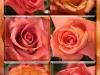 roses-for-jen-and-steve