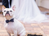 My Humans Are Getting Married Sign with Dog!