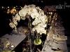 orchid-centerpieces