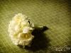 peony-bridal-bouquet