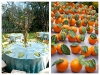 orange-place-cards-and-table-setting