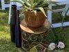 Cactus Terrarium Small Wedding Floral Arrangement