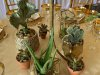close-up-of-base-of-elevated-bo-ho-arr-with-assorted-small-cactus-succulents-
