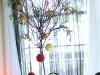 Black tree with Pompadour Balls, Phillip Estate Park, Sarasota, FL, eupohorbia and roses