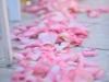 Pink Rose Petals Down Aisle