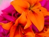 bridal-bouquet-in-bold-colors