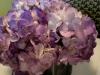 Centerpiece of purple-hydrangea