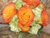 circus-roses-nested-in-green-hydrangea