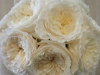 david-austin-patients-roses