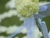 Hydrangea at the back of the aisle